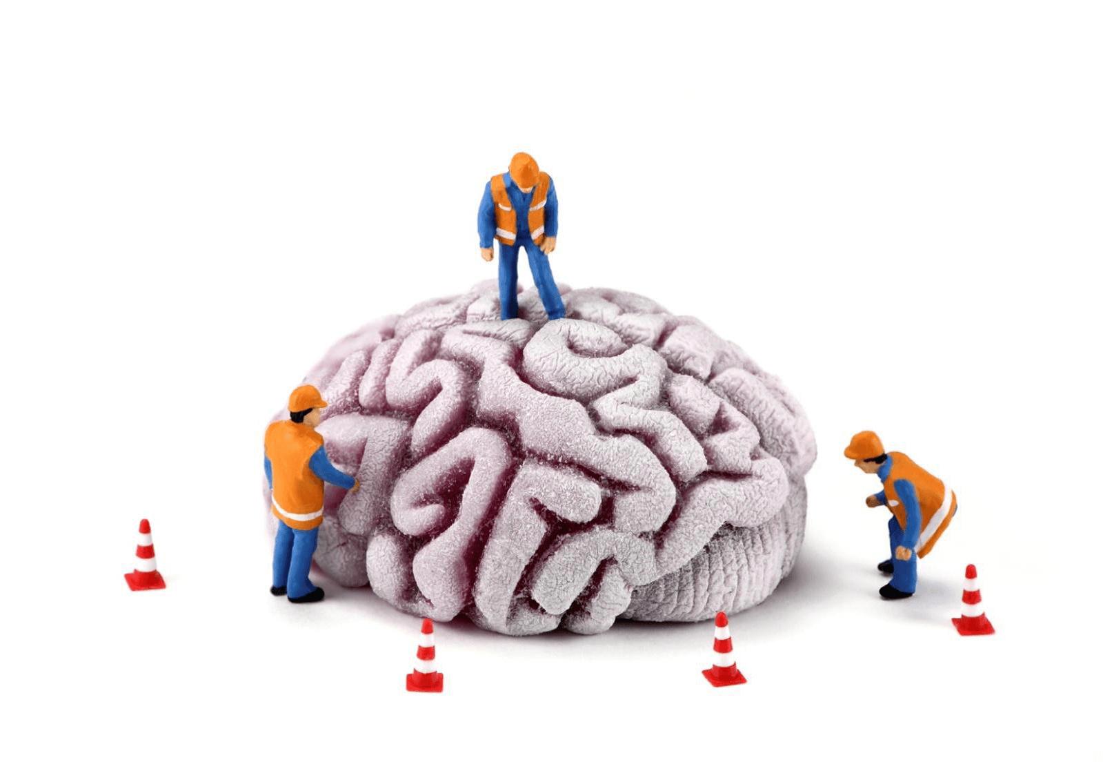 weerhandig-hersenen-npo